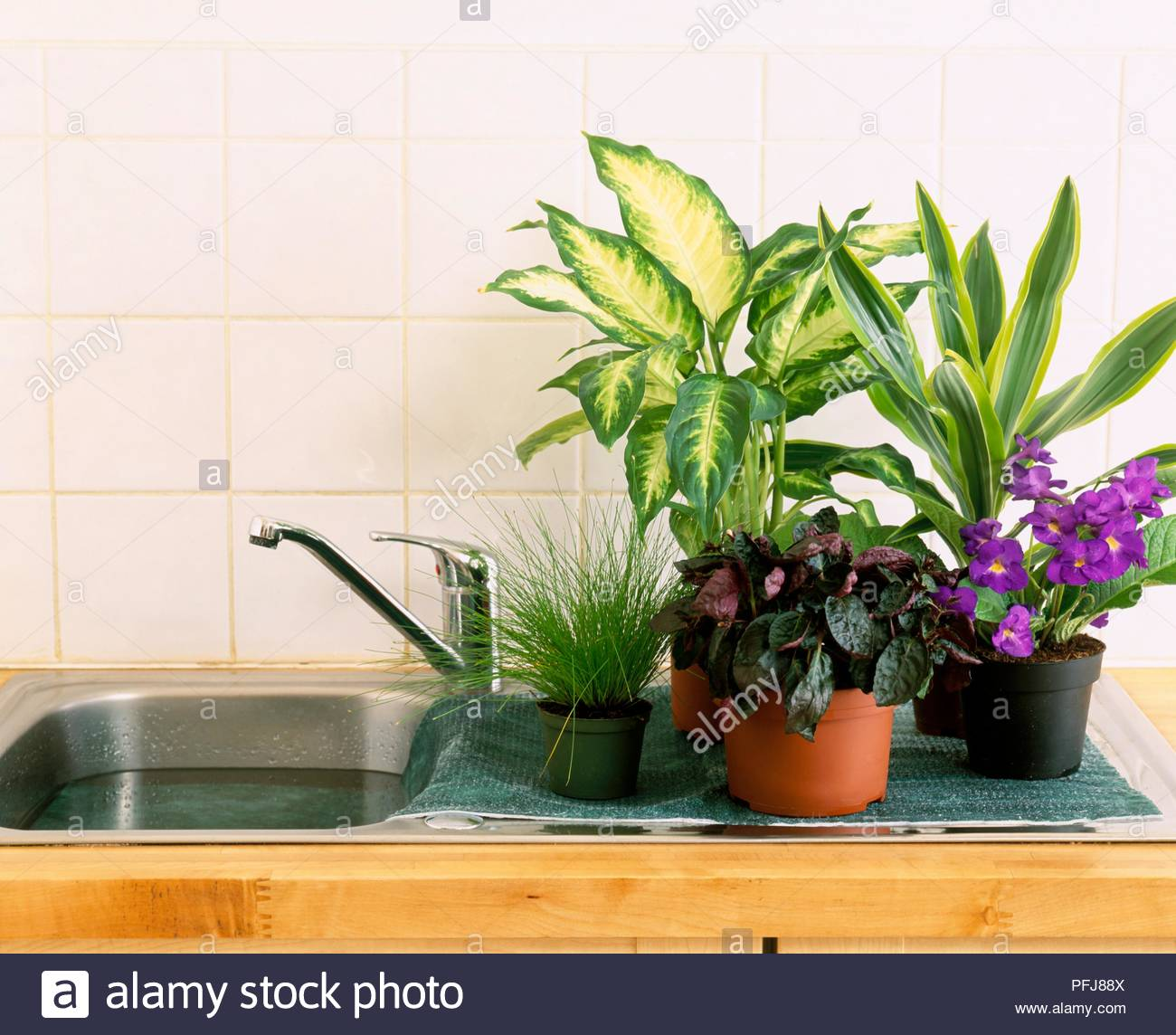 How to grow plants in old kitchen sink?